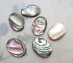 6 pcs. genuine abalone shell flat back cabochons 14x10mm - f6566